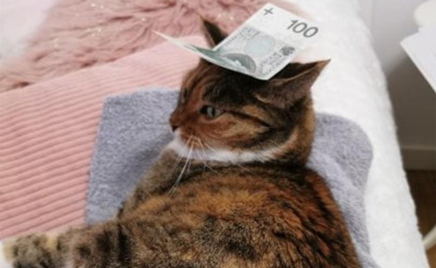 Kot ze stówą na głowie zrobi z ciebie milionera