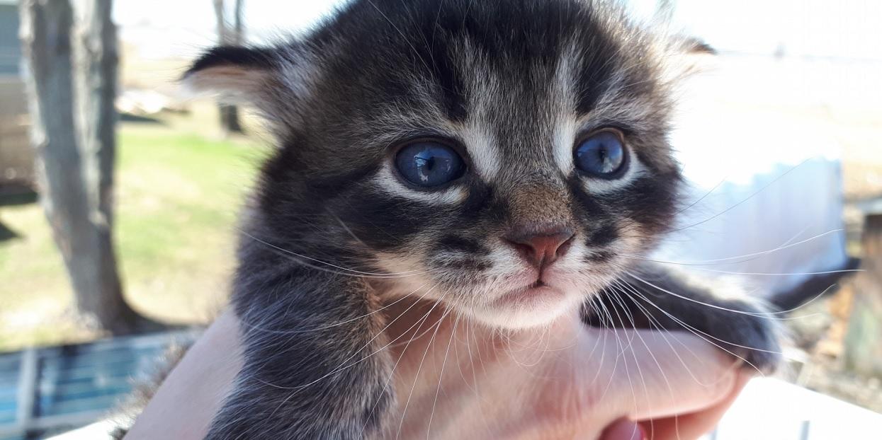 Mały kotek potrzebuje wiele ciepła