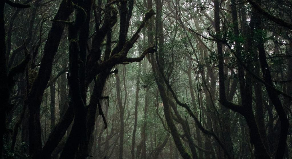 Miesiącami wywoził 14-latkę do lasu i bezlitośnie gwałcił. W końcu się doigrał
