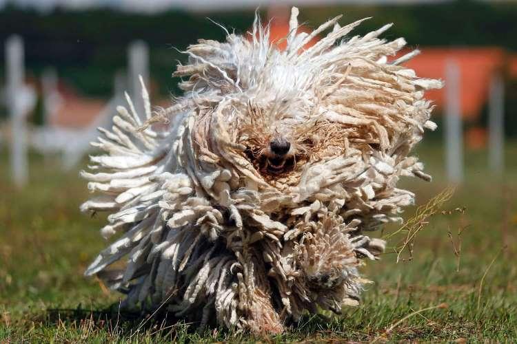 Biegnie na ciebie tak wyglądający stwór, jak się zachowasz?