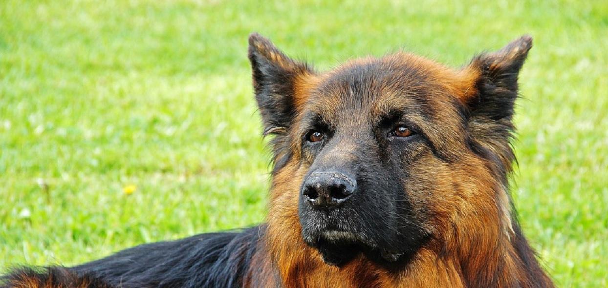 Dali spróbować psu najobrzydliwsze jedzenie świata. Jego reakcja rozwala, trudno powstrzymać śmiech
