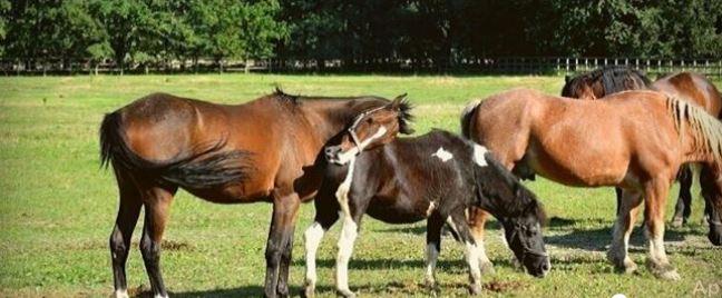 Wyrzucą potrzebujące zwierzęta na bruk? Przystań Ocalenie błaga o pomoc, liczy się każdy grosz