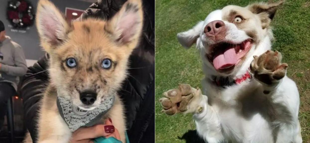 Psy wyglądają powalająco, niczym z bajki