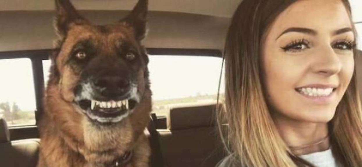 Psy w takim wydaniu rozśmieszą każdego