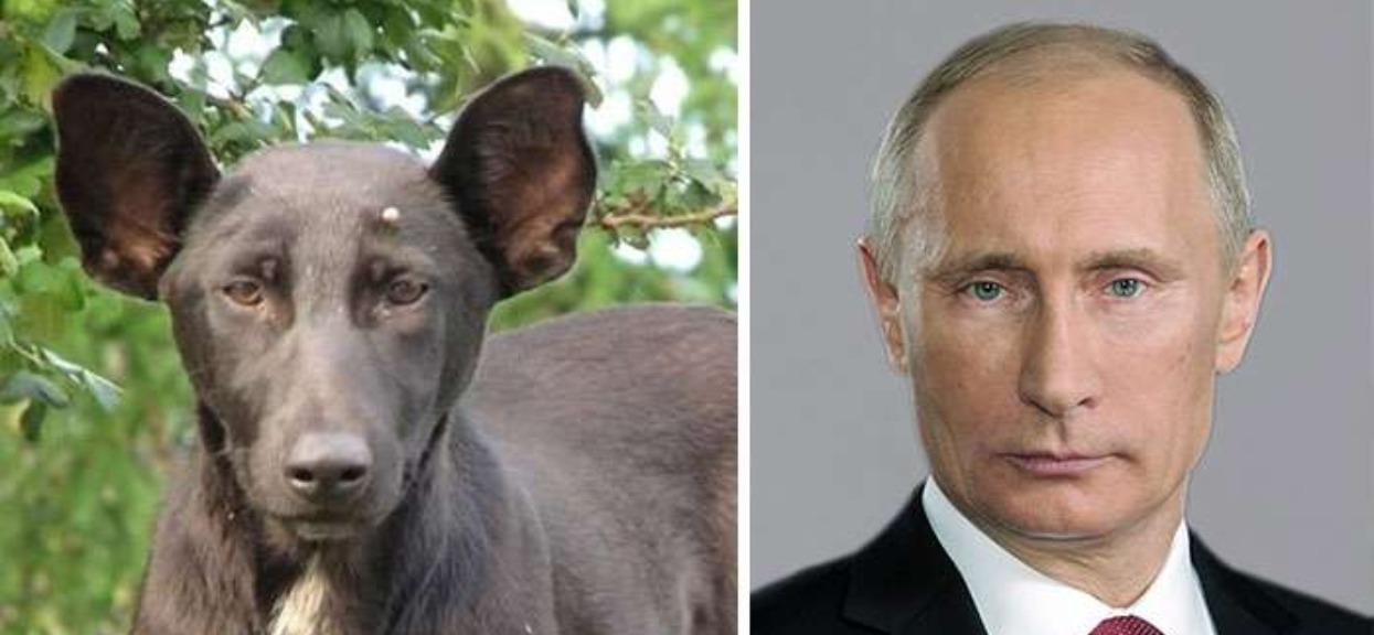 Sobowtór czai się w postaci psa