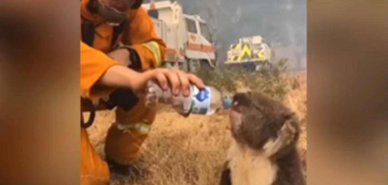 Wielkie brawa dla dzielnych strażaków