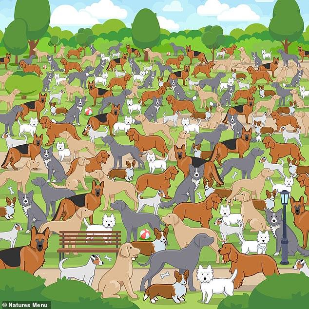 Wśród dorosłych psów ukrył się szczeniak, jesteś w stanie go zobaczyć? Rekordzista odnalazł go w 15 sekund