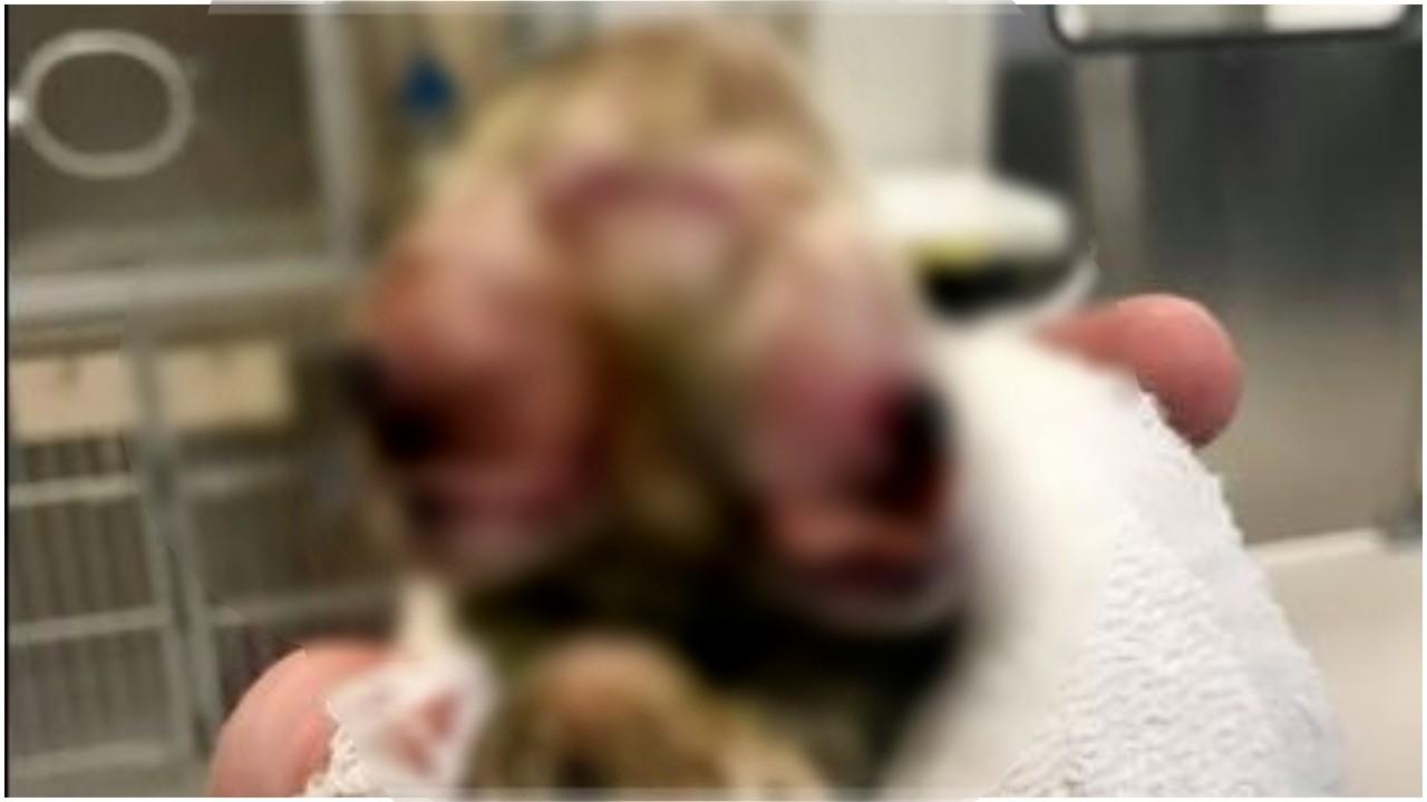 Suczka niewyobrażalnie cierpiała podczas porodu. Właściciele pobledli, gdy zobaczyli jaka istota przyszła na świat