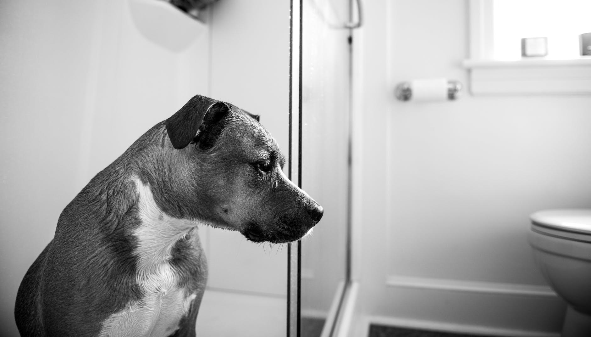 Właściciele bezdusznie dwa razy porzucili niepełnosprawnego psa. Nagranie wyciska łzy z oczu