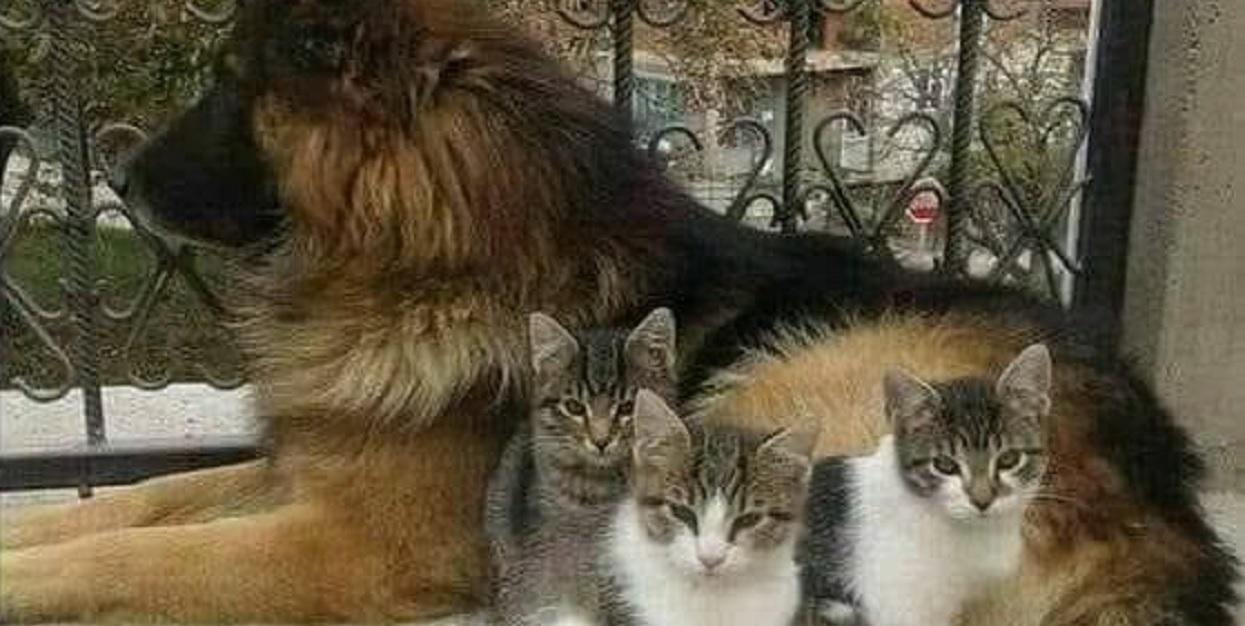 """Powiedzenie """"żyć jak pies z kotem"""" traci sens"""