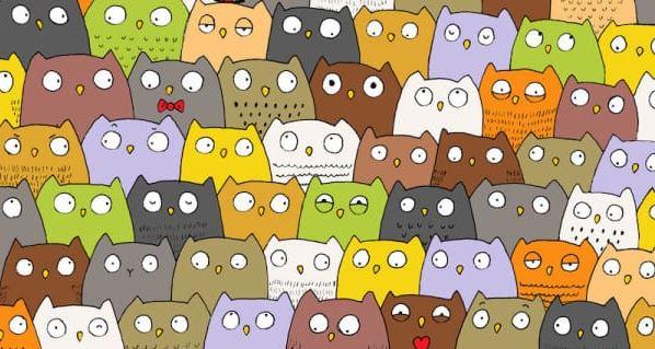 Zagadka niemal niemożliwa do rozwiązania. Wśród sów schował się kot, znajdziesz go?