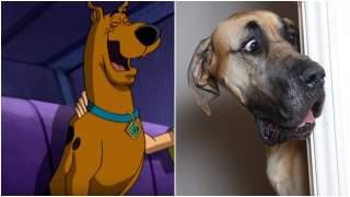 Prawdziwy Scooby-Doo jest wśród nas. Rozbrajające zdjęcia psa są niezbitym dowodem, padniecie ze śmiechu