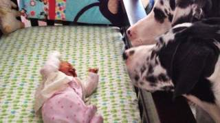 Rodzice tylko na moment zostawili dziecko samo z psami. Zobacz co zastali, kiedy wrócili chwilę później, 17 powalających zdjęć