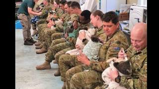 Wielkie brawa dla żołnierzy. Karmią misie koala, które ucierpiały w pożarach