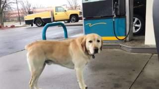 Na stacji benzynowej podszedł do niego pies. Kiedy przeczytał napis na jego obroży, zaniemówił