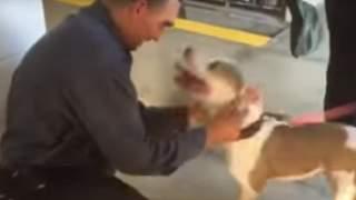 Pies nie widział właściciela przez 7 miesięcy. Nagrali jego reakcję na widok pana, słowa grzęzną w gardle