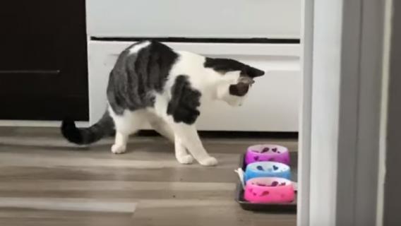 Kot dziwnie się zachowuje