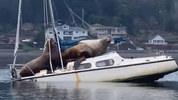 Nagranie tonącej łodzi