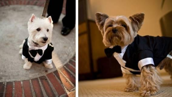 wesele z psami