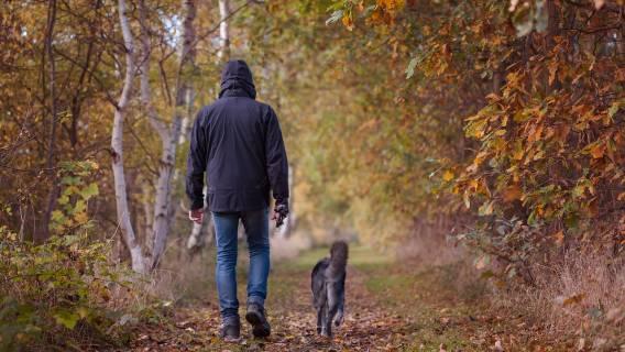 Psy zginęły w Sylwestra