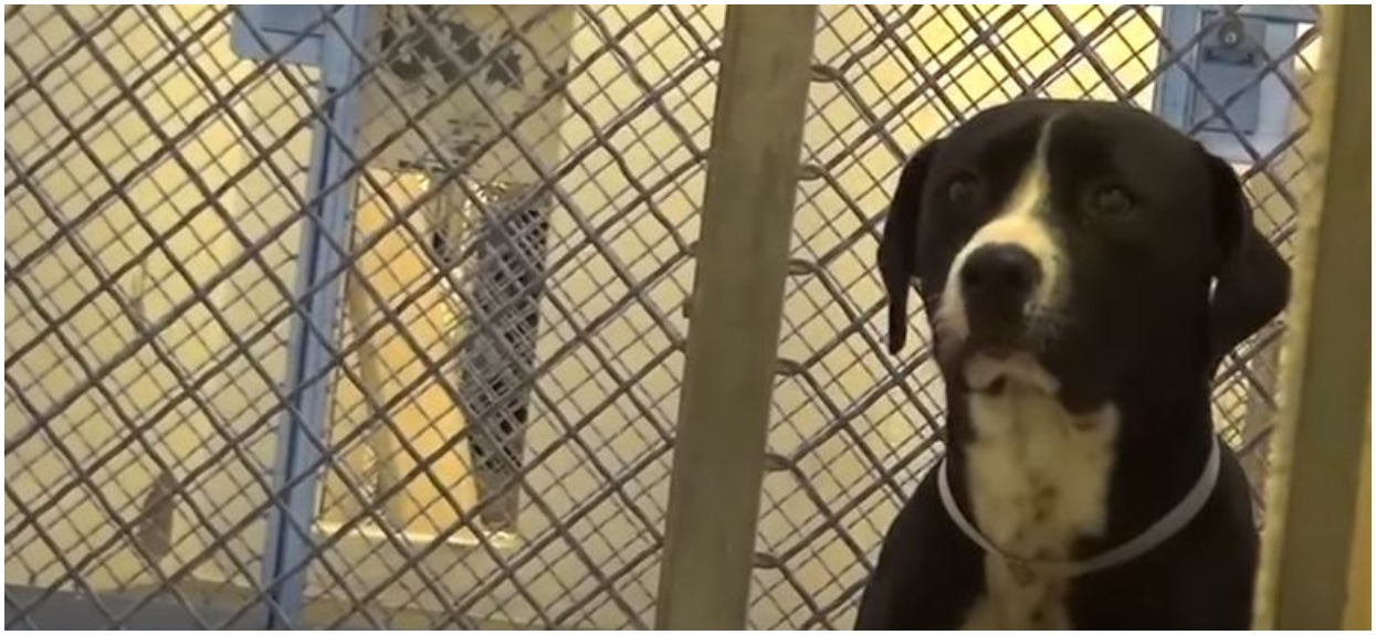 Pies bał się, że nigdy nikt go nie adoptuje. Gdy w końcu przyszła kolej na niego, jego reakcja doprowadziła wszystkich do łez