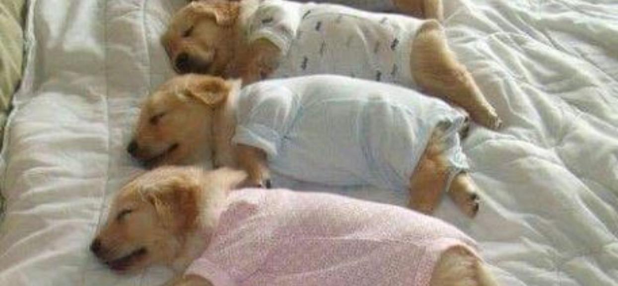 Dobranoc, pieski już w piżamkach i łóżeczkach