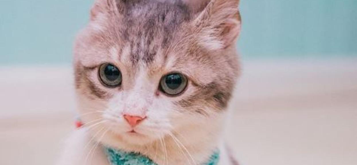 Kociak zmaga się ze śmiertelną chorobą