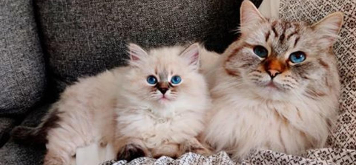 Ciekawe, na co kotek tak patrzy?