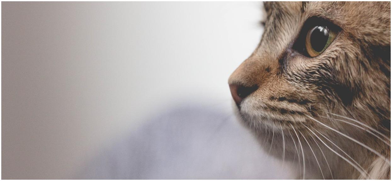 Koty z sąsiedztwa psują ci ogródek? Wystarczy zastosować prosty patent, dzięki któremu goście przeniosą się gdzie indziej