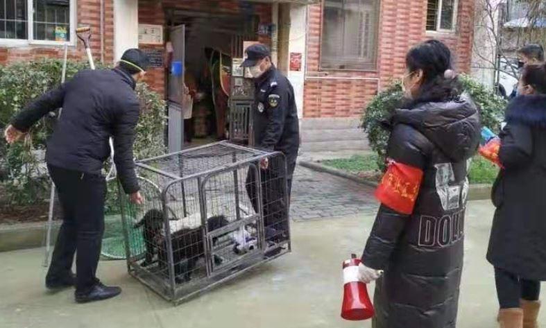 Ludzie w popłochu uciekali przed koronawirusem. Skazali tysiące psów i kotów na okrutny los
