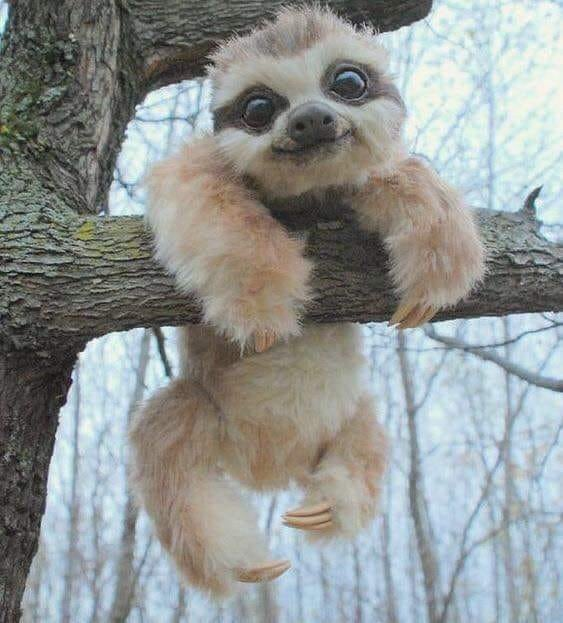 Uroczy mały leniwiec przesyła pozdrowienia z drzewa