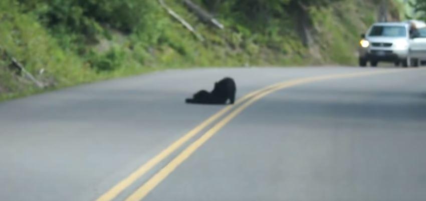 Mężczyzna jechał samochodem, kiedy zobaczył dziwną rzecz na drodze. Wysiadł, przyjrzał się i od razu wyciągnął telefon
