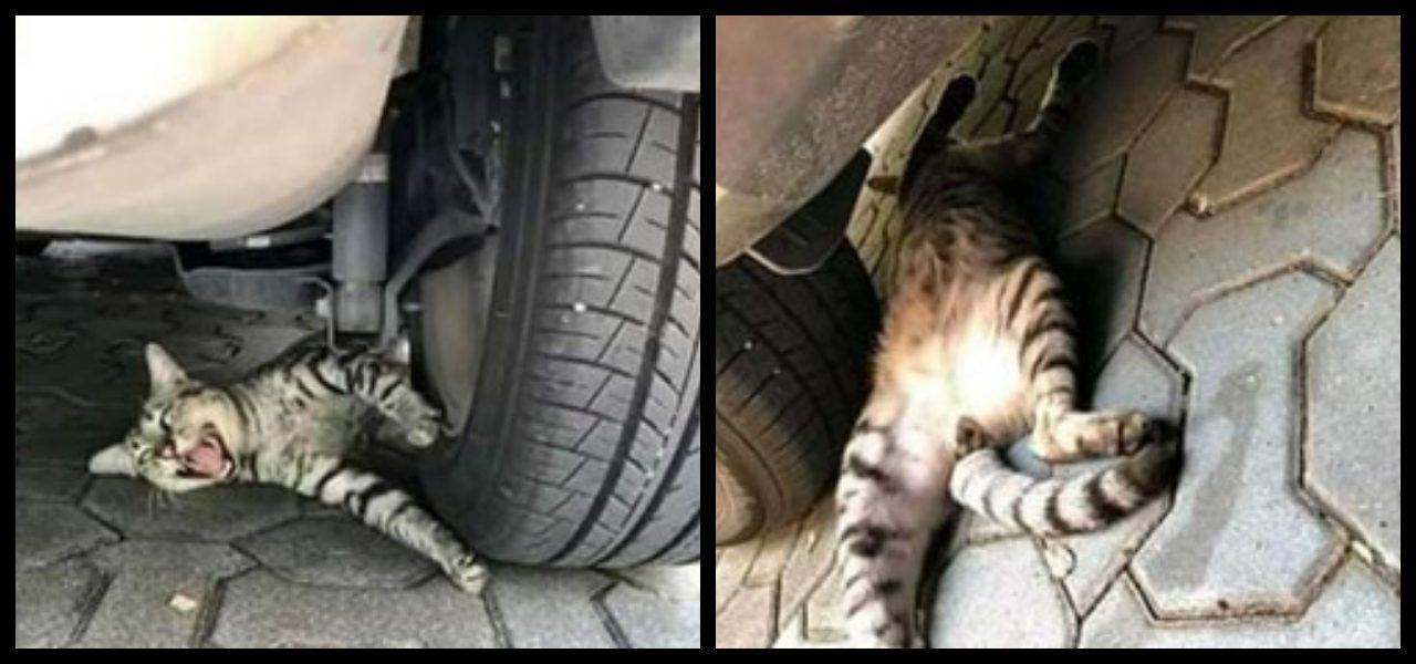 Kot sprawił, że jego właściciel prawie dostał zawału. Oscarowe przedstawienie