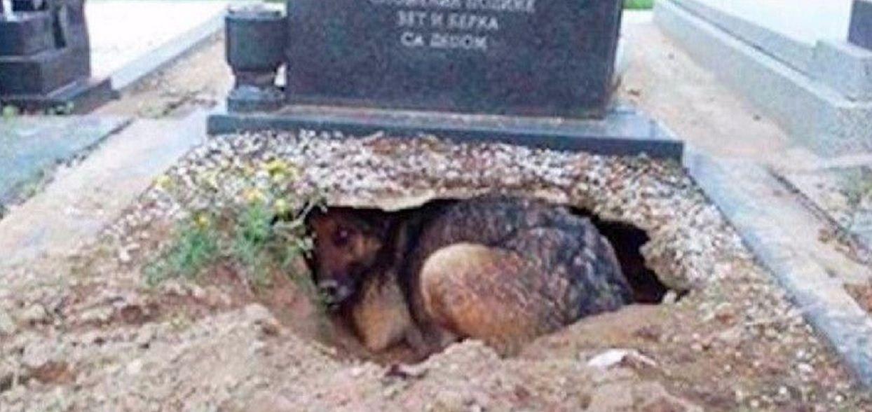Wszyscy myśleli, że ten pies wraca na grób swojego pana. Prawda okazała się zupełnie inna