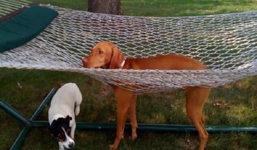 Chciał tylko odpocząć na hamaku. Okażmy mu wsparcie, każdy miewa pechowe dni