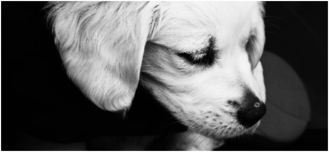 Pies się wściekł, gdy pani sięgnęła po szczotkę. Niewiarygodne, co zrobił gdy zaczęła go czesać, wszystko się nagrało