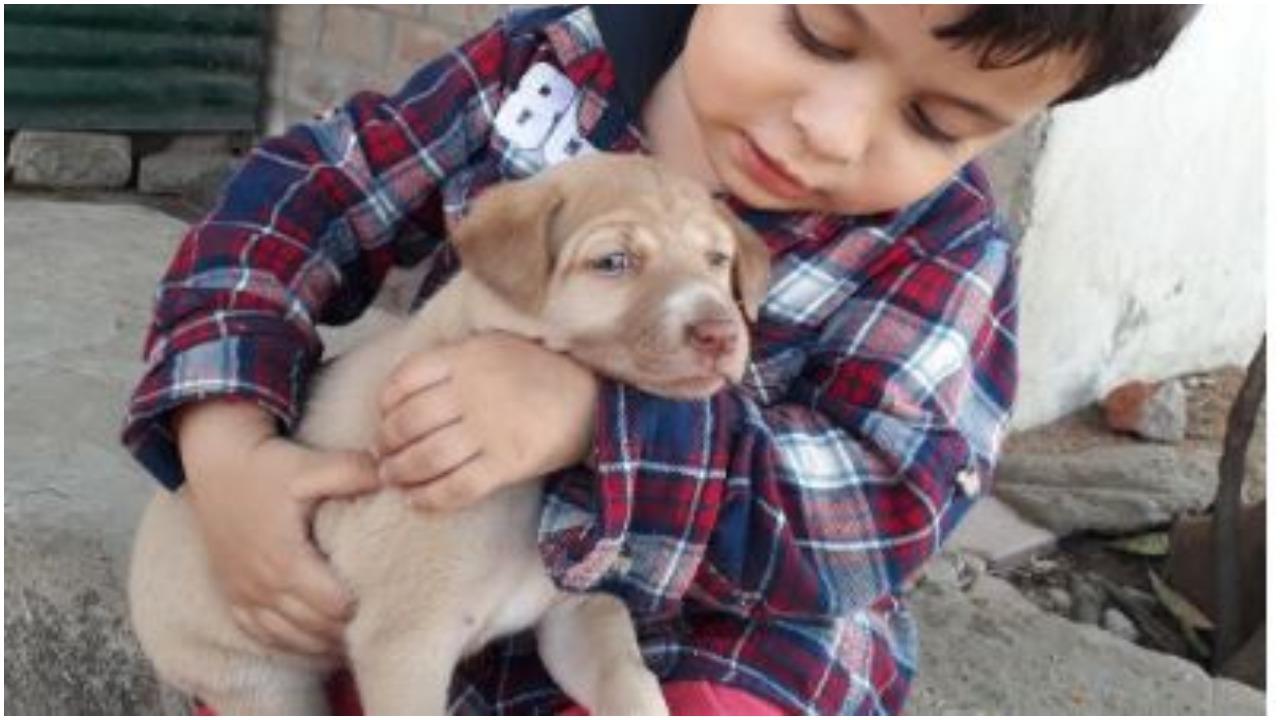 Chłopczyk karmił bezdomnego psa. Od starszego mężczyzny usłyszał słowa wołające o pomstę do nieba