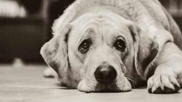 Pies na pogrzebie zajrzał do trumny właściciela. Straszne odkrycie