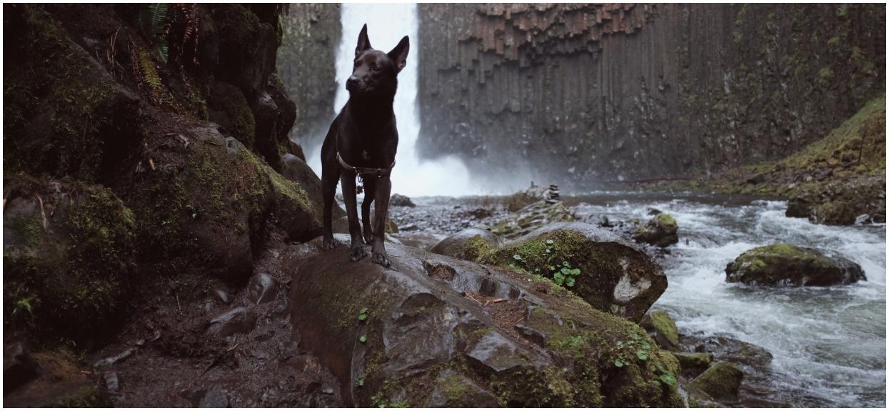Pies nagle rzucił się w kierunku rzeki. Gdy poznali powód, byli zdruzgotani