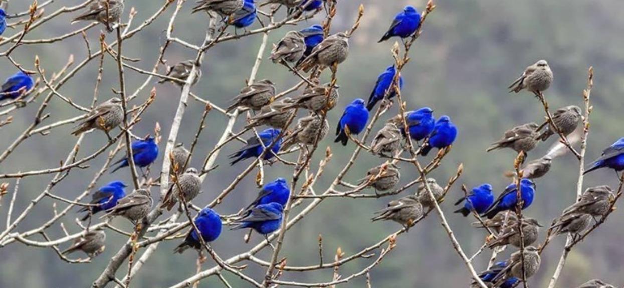 Na zdjęciu widać przepiękne ptaki Grandala