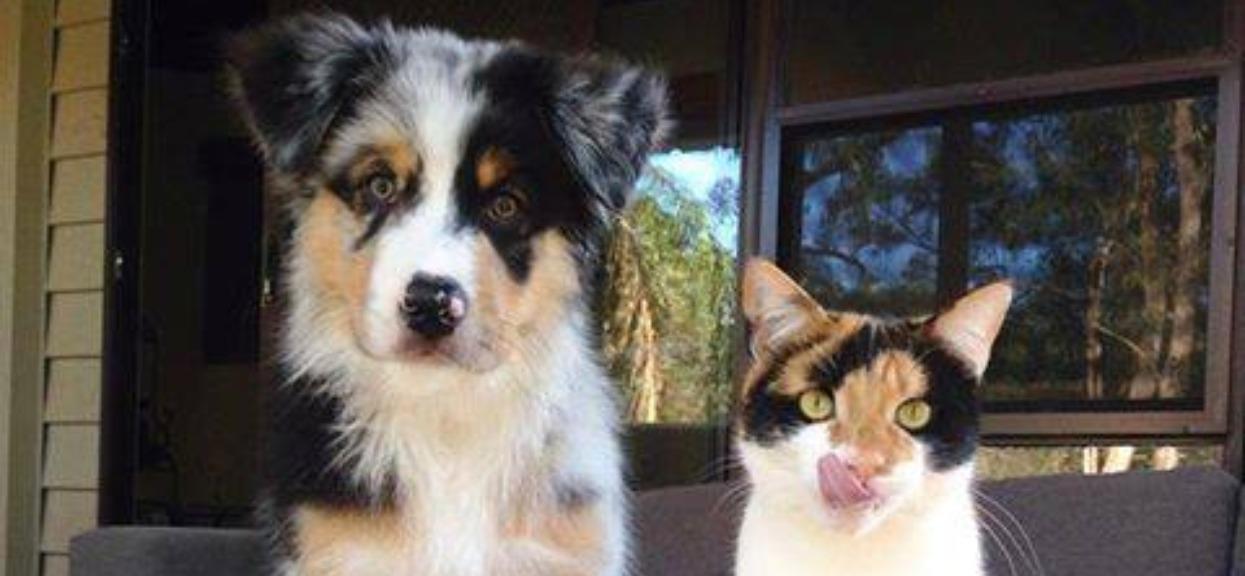 Wyglądają jak rodzeństwo