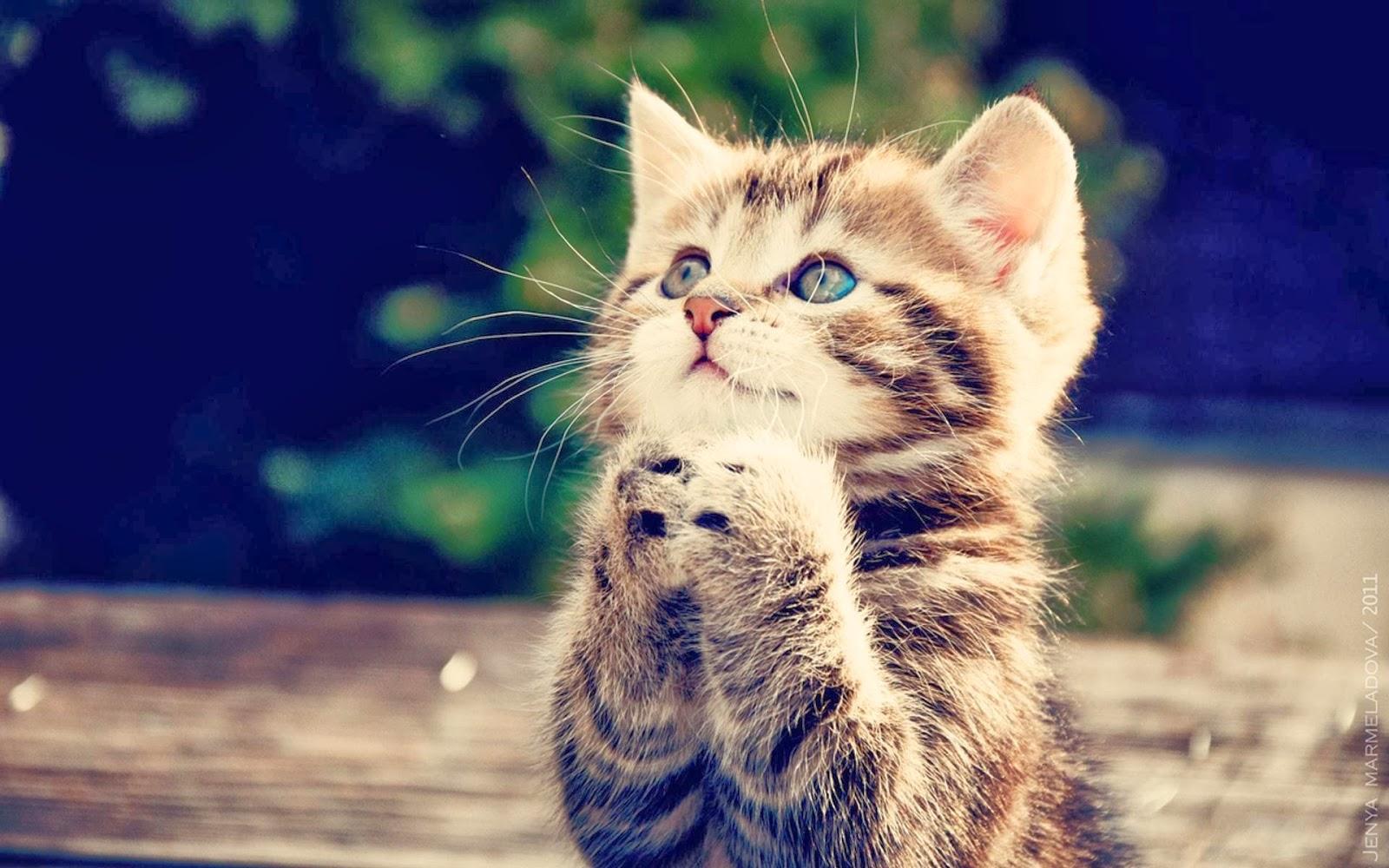 Słodki kotek prosi o serduszko
