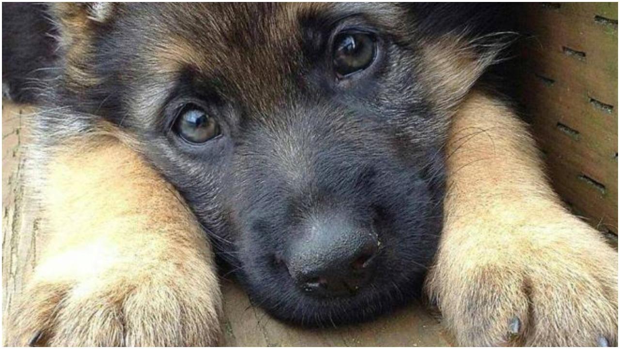 Smutny szczeniaczek potrzebuje pocieszyciela, ktoś chętny?