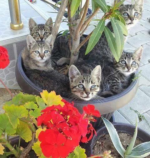 Kotki wybrały sobie niebywałe miejsce do spania