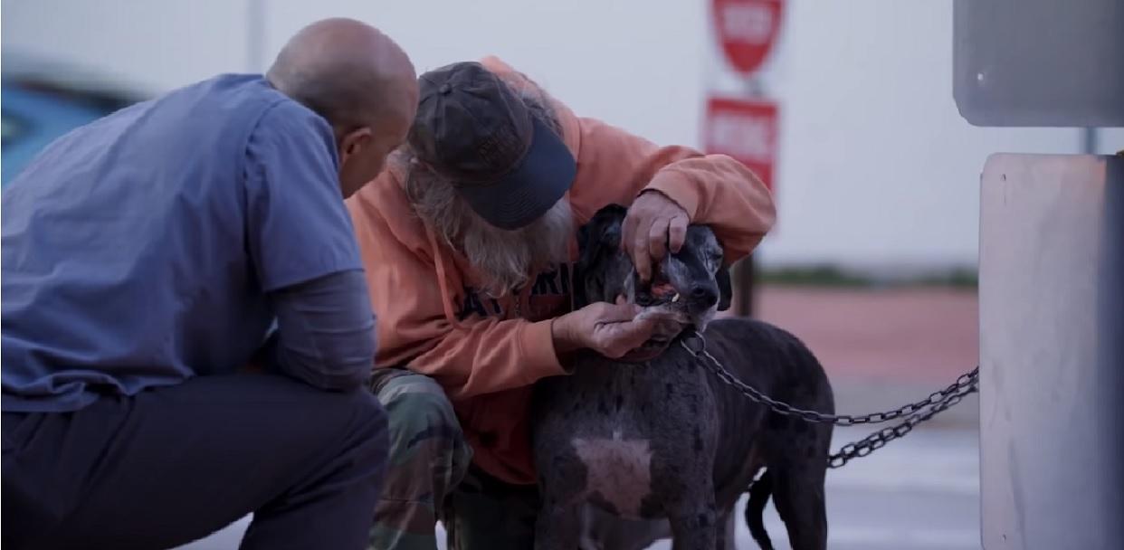 Brawa dla niego! Weterynarz za darmo leczy zwierzaki należące do bezdomnych