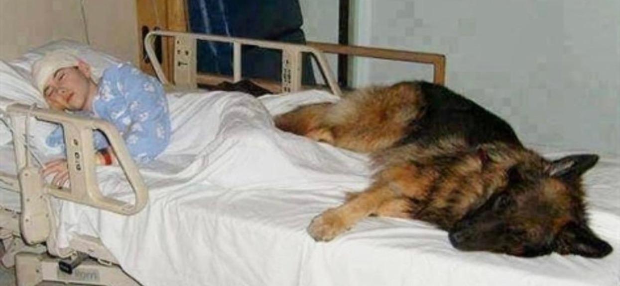 Prawdziwa miłość, pies nie opuścił swojego pana nawet w szpitalu