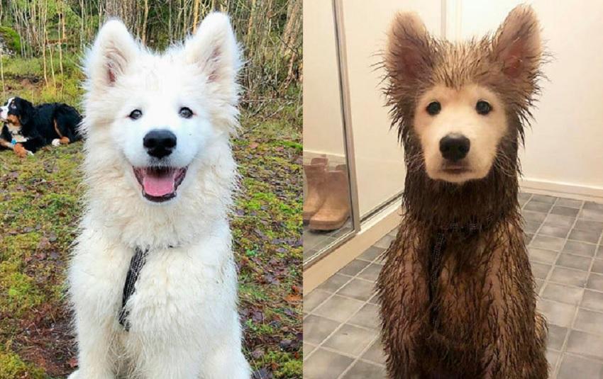 Nigdy więcej nie wyszli z psem na spacer zaraz po deszczu