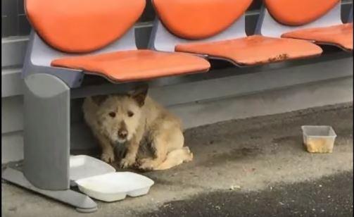 Bezdomny pies miesiącami błąkał się po mrozie. Kiedy w końcu ktoś do niego podchodzi, reakcja zwierzaka powala