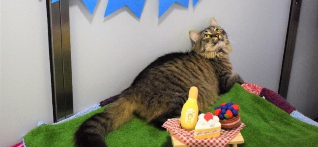 Schronisko zorganizowało przyjęcie urodzinowe dla śmiertelnie chorego kota. Początek imprezy okazał się druzgoczący