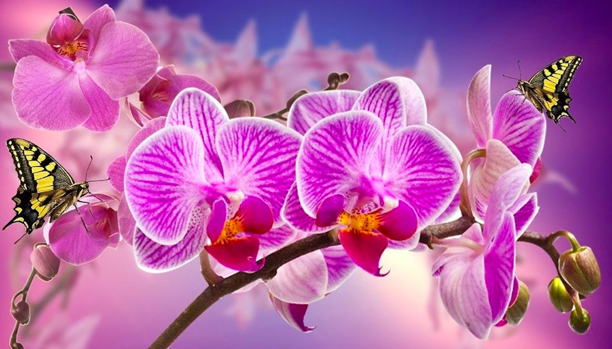 Tajny trik kwiaciarek na opadłe storczyki. Wystarczy jedna rzecz, by odżyły i pięknie kwitły